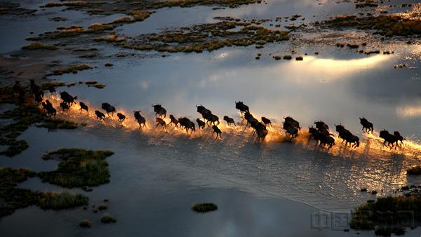 赴汤蹈火》2008年3月拍摄于博茨瓦纳_副本.jpg